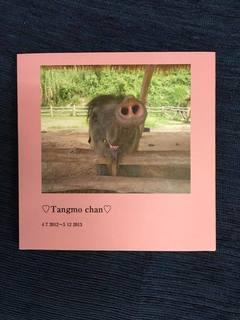 tangmochanphotobook.jpg